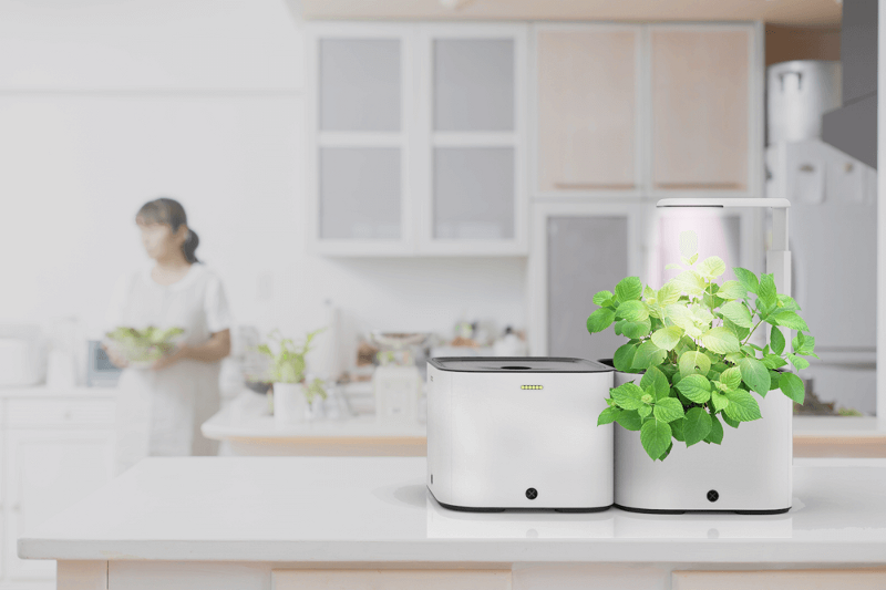 Image of Grobo Pods sitting on a kitchen counter growing food.