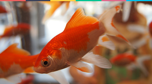 Your Customers Attention Span is Less than a Goldfish's! What Can You Do About it?