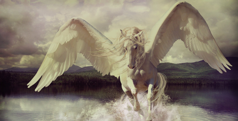 2016 is the Year of the Pegasus