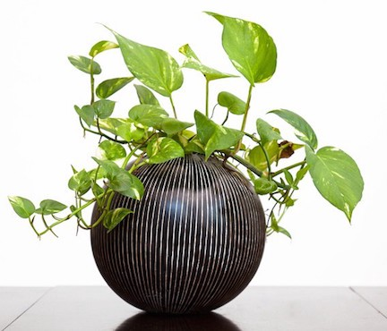 Top 10 air purifying house plants awair medium for Easy to keep garden plants
