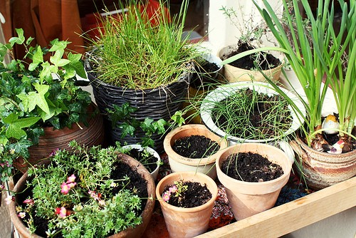 There Are A Lot Of Ideas About Apartment Balcony Gardening Design You Can Make Grow Your Greens Vertical Or In Containers Having Container Garden Is