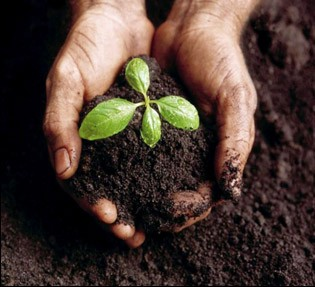 Healthy Soils Are Critical To Farmer's Profits
