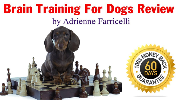 Brain Training For Dogs Review 2020