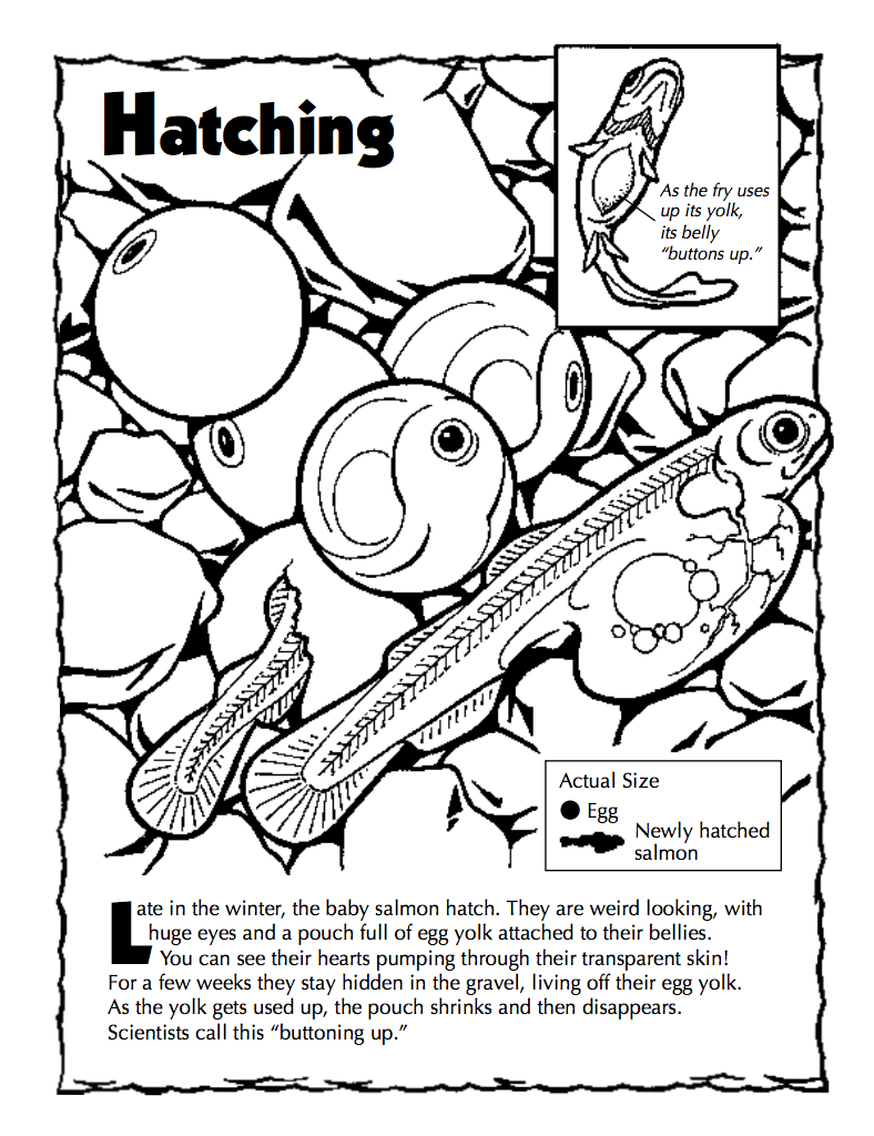 check out some of our other educational resources around fish and their fascinating migration