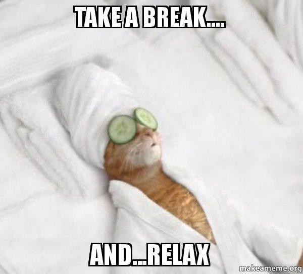 Relaxing cat while you code a website in bootstrap 4 beta