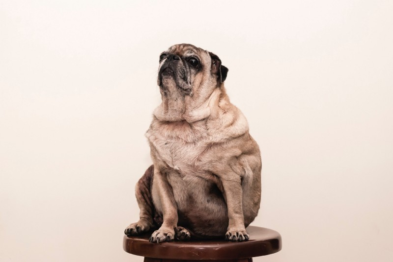 Make multipage HTML development suck less with Pug