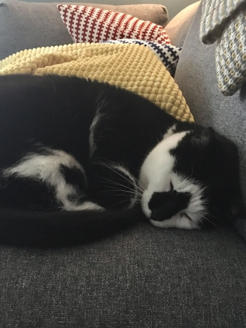 Cat curled up on couch