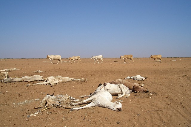 Dying animals in Kenya