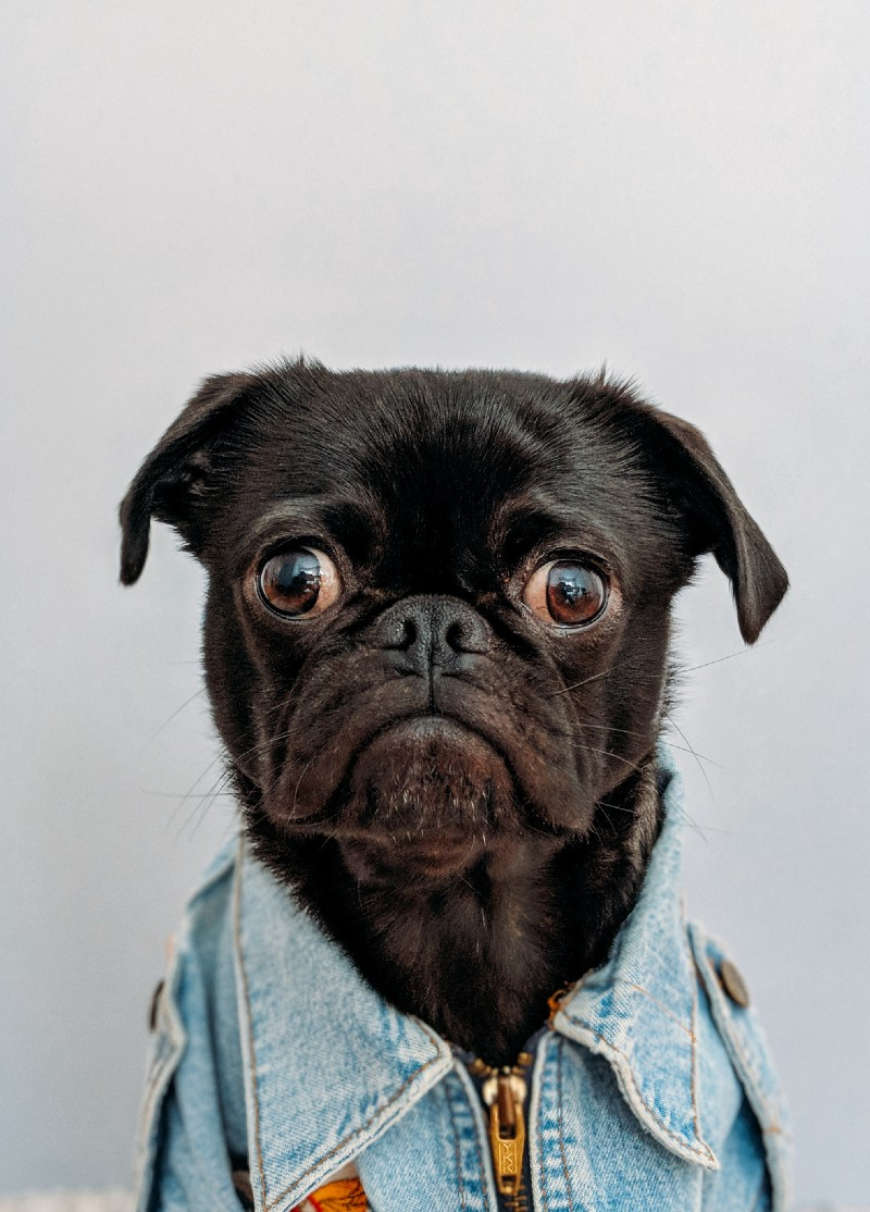 A dog looking surprised