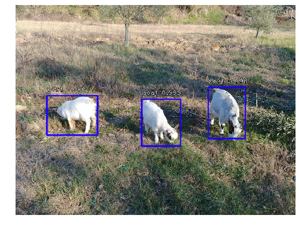 Object Detection in Colab with Fizyr Retinanet