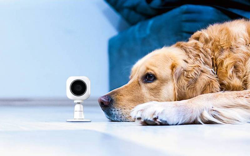 Wireless security systems coupled with home security apps are popular because they are affordable, easy to install, and offer superior home protection.