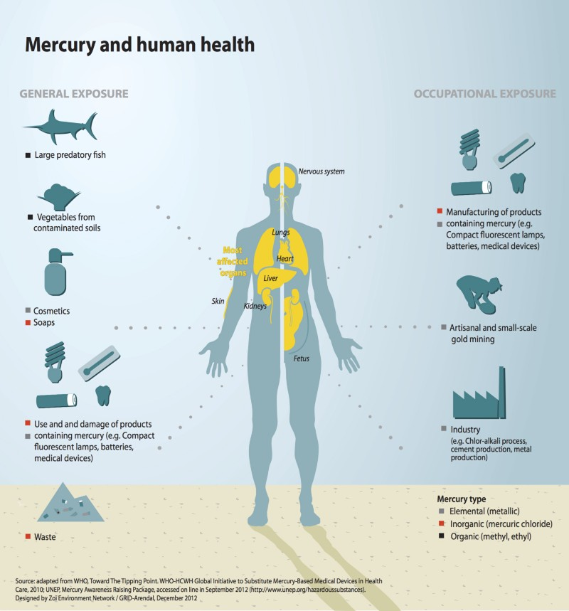 the effect of mercury on the environment and people What are the effects of cyclones on environment and people  it would effect the environment by knocking down trees and  health effects of mercury.