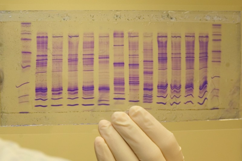 Juries now expect DNA evidence in all murder cases, but it's not unusual for none to be found.
