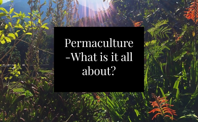 Permaculture what is it all about