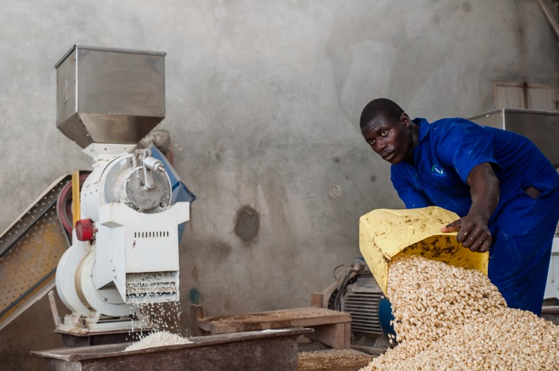 Moses Byamukama of Kasawo Maize Milling Plant prepares maize grain for milling. / SPRING