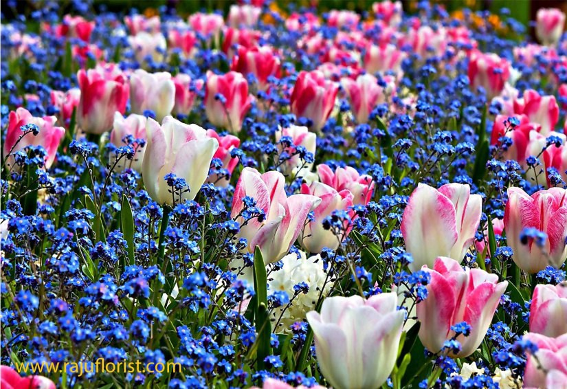 We talk about a list of spring flowers firoz ansari medium flowers for early spring bloom mightylinksfo