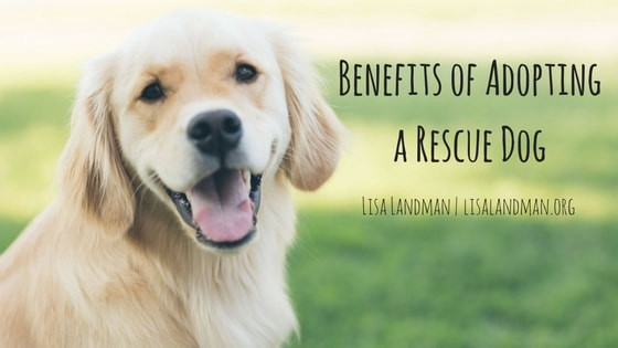 the benefits and wonders of adopting a dog