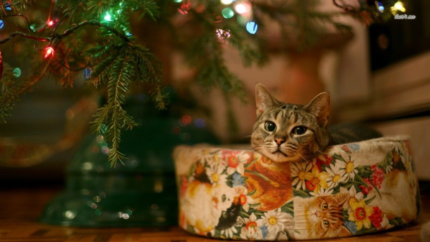 Rachael berkey fit yourself club the cat is drinking out of the christmas tree water again and if he throws up in the night i am not cleaning it solutioingenieria Choice Image