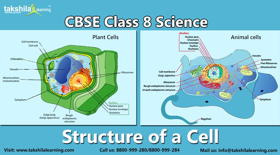 Cbse class 8 science structure of a cell takshilalearning medium in this article we are going to explain cbse class 8 science structure of a cell a building block or basic structural unit of life ccuart Gallery