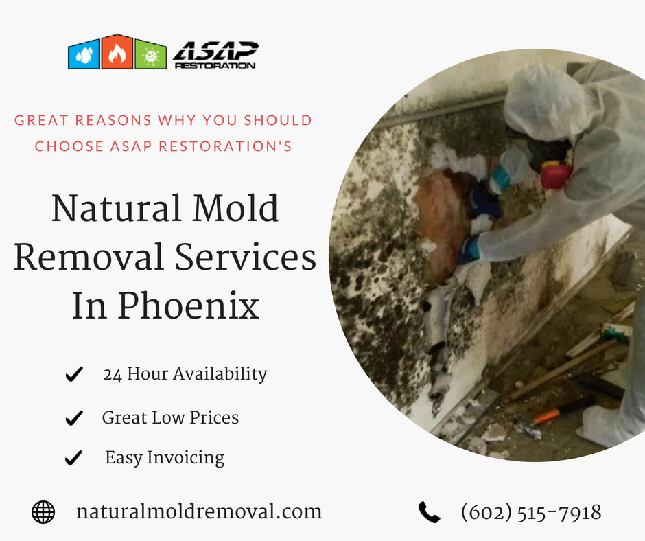 Natural Mold Removal Services In Phoenix Peter Parkar Medium - Mold removal invoice