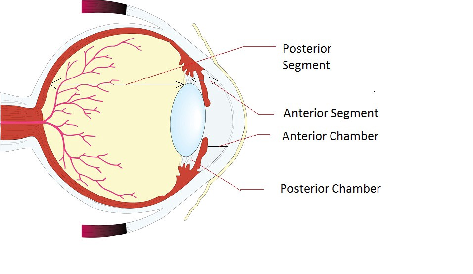 difference between segments and chambers of the eye