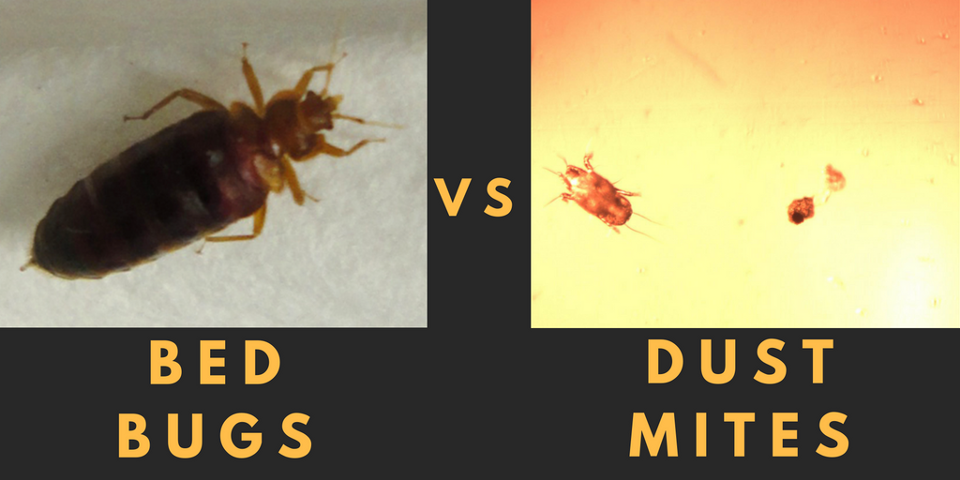 Dust That Kills Bed Bugs