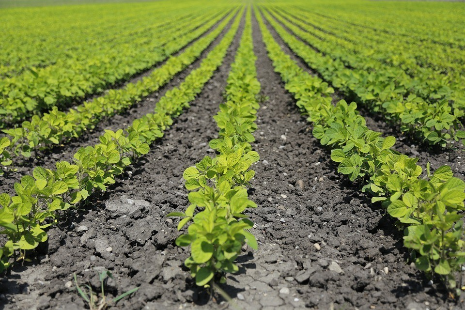 negative impacts of agriculture on environment