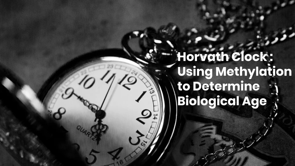 Examining the Horvath Clock and the Significance of Biological Age
