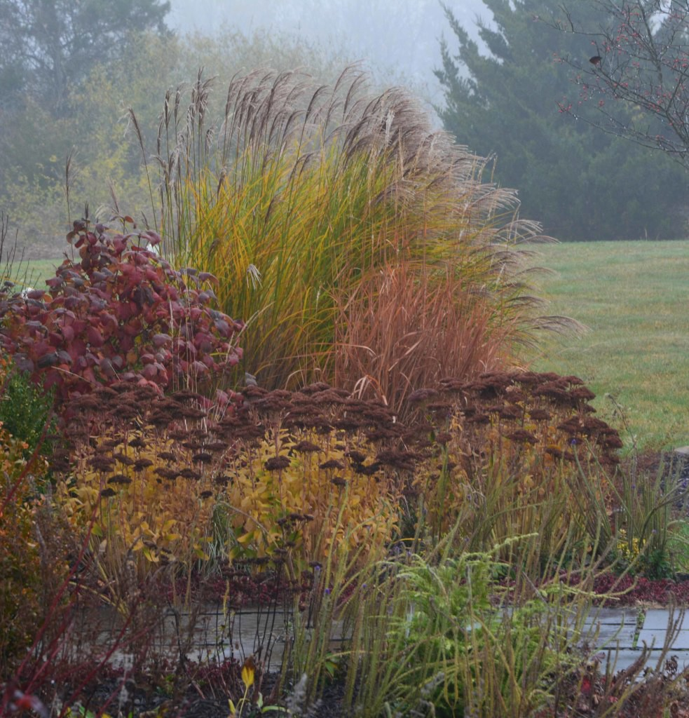 6 lesser known plants with great fall color – The Garden Collective ...